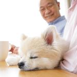 動物看護・介護について